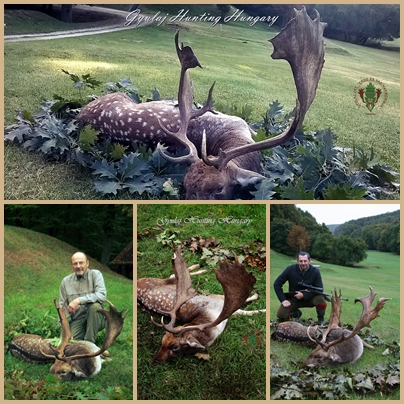 Fallow bucks photo collage from Gyulaj